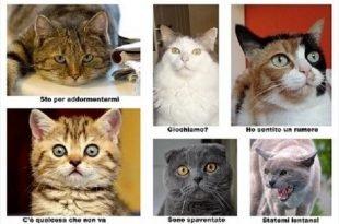 Comunicazione gatti-uomini, presto i pet potranno parlare con noi