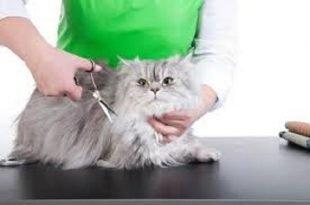 Come tosare un gatto e quando si deve fare