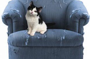 Gatti e dispetti, come educare un gatto dispettoso