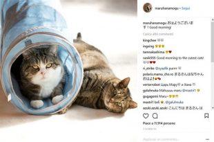 PetScene, nuovo Facebook per gatti e altri pet