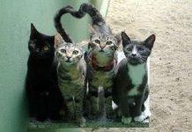 San Valentino 2018 gatti, cosa regalare il 14 febbraio