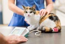 Medicine al gatto, come dargliele senza stressarlo