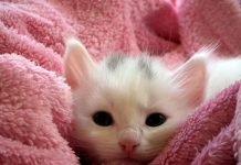 Come accudire un gattino trovatello nelle prime settimane