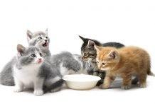 5 alimenti proibiti per il gatto