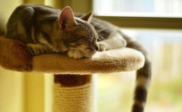 Come scegliere il migliore tiragraffi per gatti