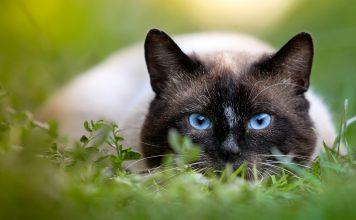 Il mondo visto dalla prospettiva degli animali: dai cani ai gatti, passando a uccelli e insetti