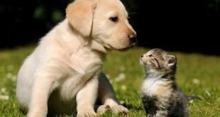 Cani e gatti, come varia l'alimentazione per ogni momento della loro vita