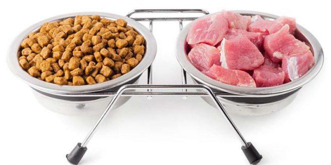 Alimentazione dei nostri amici animali: cibo preconfezionato o casalingo?