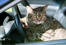viaggio con gatti