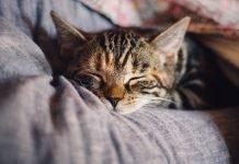 riconoscere quando il gatto sta male