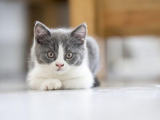 gatti piccoli