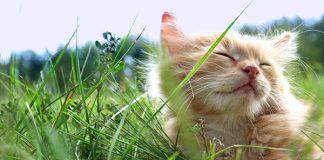 vacanza cat friendly